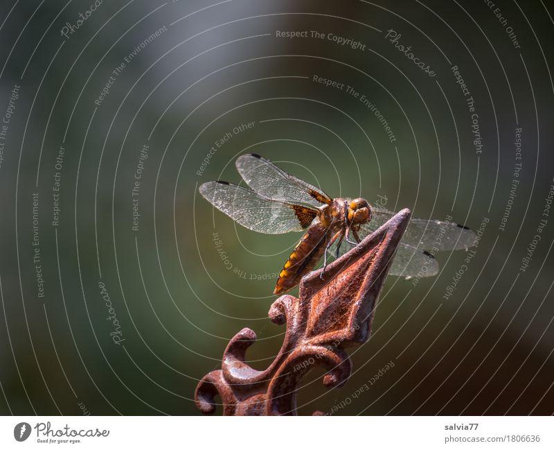 Orientierung | Spitzenaussicht ist immer gut Natur Sommer Tier Umwelt Garten grau braun Wildtier Aussicht Perspektive warten Geschwindigkeit Spitze beobachten Ziel Insekt