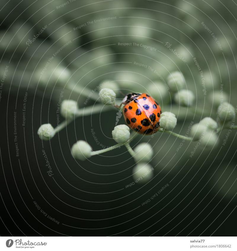Knöpfchen Natur Pflanze Landschaft Tier Umwelt Blüte Frühling Glück Garten Wildtier Insekt Leichtigkeit Käfer krabbeln Marienkäfer Frühlingsgefühle