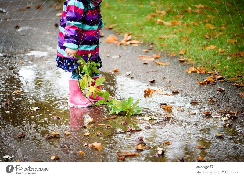 Regentrude II Mensch Kind Freude Mädchen Herbst Spielen Park Ausflug nass Spaziergang Zweig Kleinkind herbstlich Pfütze Gummistiefel