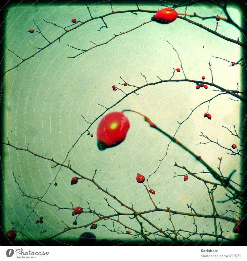 think. red. Himmel Lomografie Natur rot Pflanze Winter Umwelt Herbst Lebensmittel Rose Blüte Sträucher Zweig Bioprodukte Farbfoto Außenaufnahme