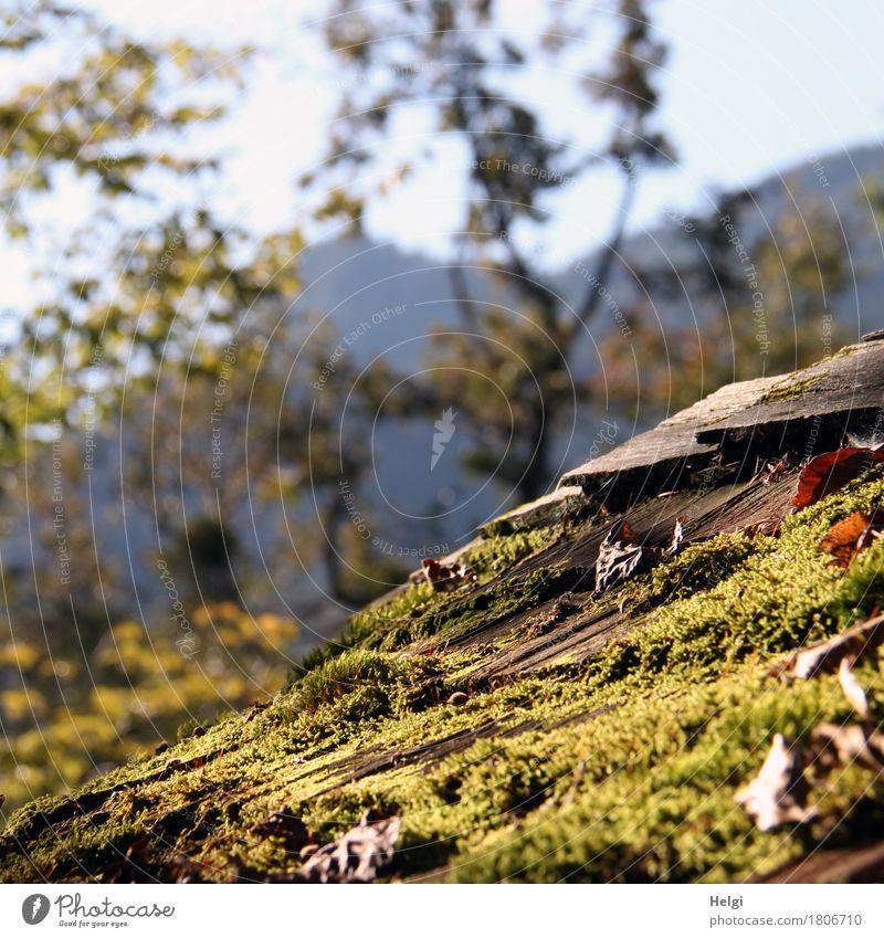 mit Irene unterwegs   moosbedeckt... Himmel Natur alt Pflanze blau grün Baum Blatt ruhig Berge u. Gebirge Umwelt Herbst natürlich Holz grau liegen