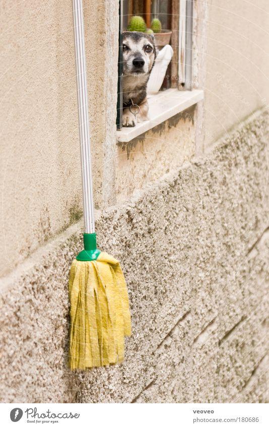 mopdog schön Wand Fenster Hund Häusliches Leben Reinigen bizarr Kaktus Fensterbrett Tier Wischen Staubwedel Streetlife Hundeblick Hundekopf