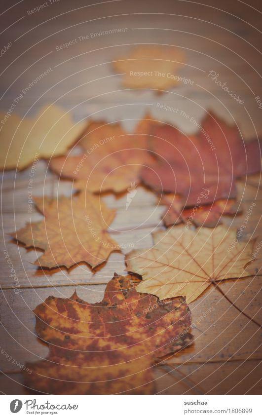 herbstlich Herbst Blatt mehrfarbig rot Bodenbelag Holz Natur Jahreszeiten Alter Vergänglichkeit Tod Traurigkeit