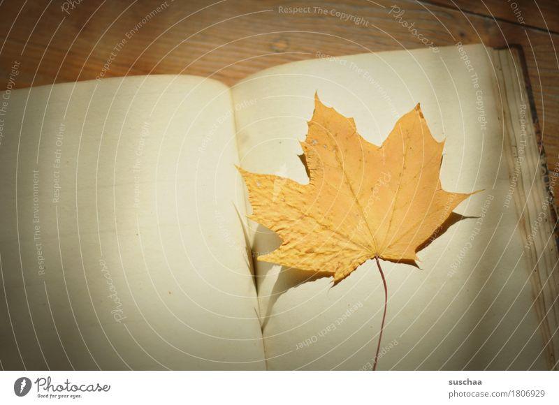 unbeschriebenes blatt Buch Tagebuch Notizbuch Buchseite schreiben blanko alt retro vergilbt leer Blatt Herbst Erinnerung