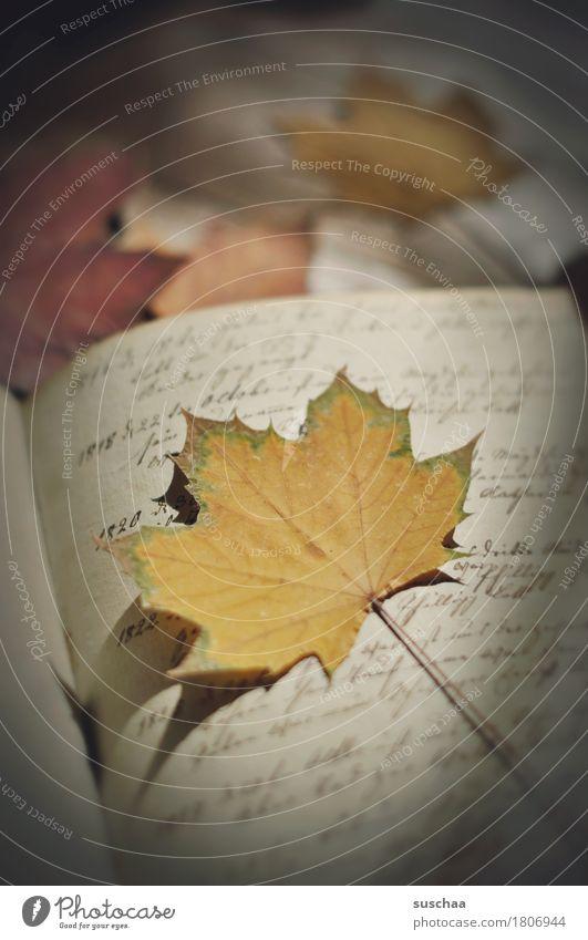 seite + blatt II alt Blatt Herbst retro Buch Vergänglichkeit Information schreiben Schriftstück Brief Buchseite Zettel Printmedien Handschrift Erbe vergilbt