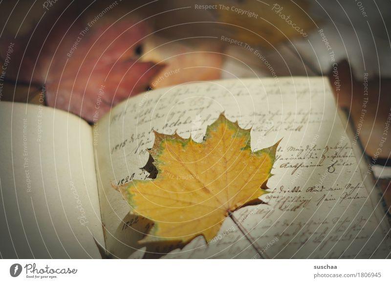 seite + blatt I Buch Tagebuch Handschrift Schreibschrift alt retro Erbe Buchseite Printmedien Herbst Blatt Schriftstück vergilbt Grunge schreiben Brief