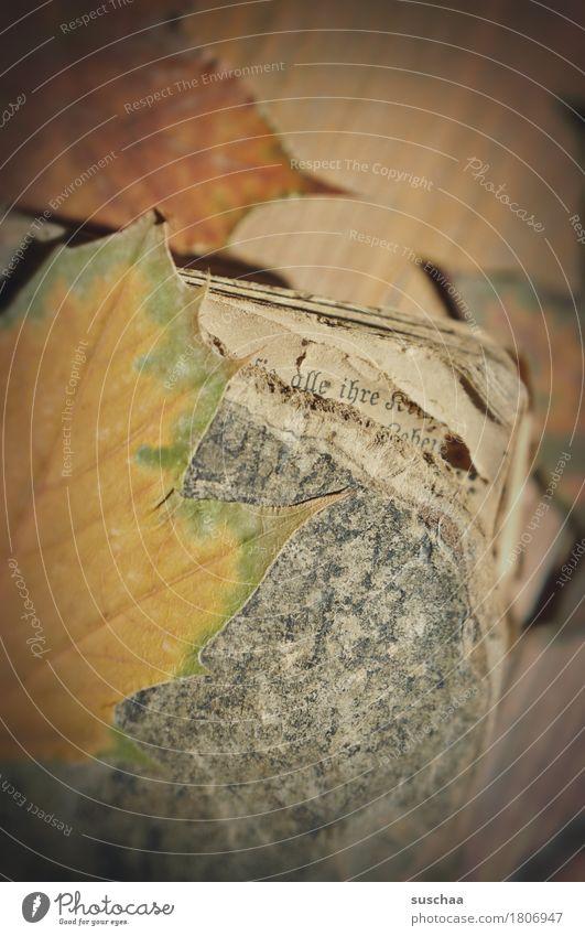 alt Blatt Traurigkeit Herbst retro Buch Papier Vergänglichkeit kaputt lesen Schriftstück Erinnerung Nostalgie Buchseite Printmedien altmodisch