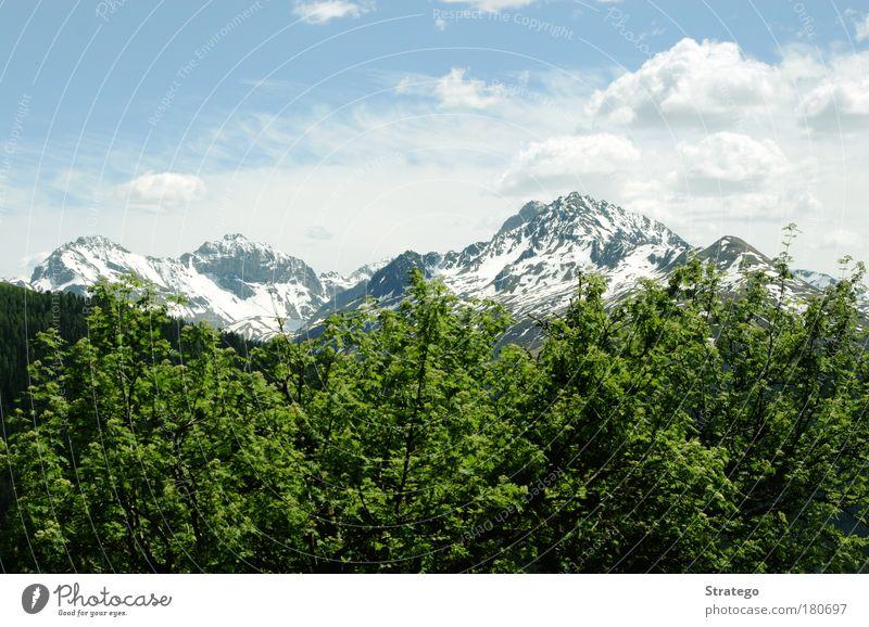 grün Farbfoto Außenaufnahme Menschenleer Textfreiraum oben Tag Sonnenlicht Zentralperspektive Umwelt Natur Landschaft Pflanze Urelemente Luft Himmel Wolken