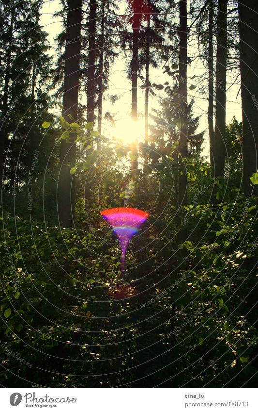 septembersonne Farbfoto Außenaufnahme Textfreiraum unten Abend Licht Lichterscheinung Sonnenlicht Sonnenstrahlen Gegenlicht Umwelt Natur Pflanze Erde Sommer