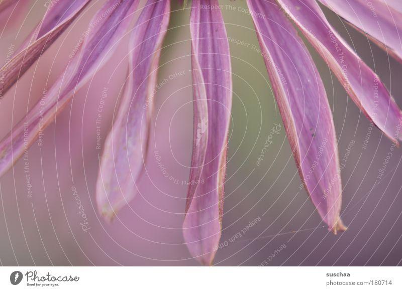 .. noch ein bisschen sommer Farbfoto Außenaufnahme Nahaufnahme Detailaufnahme Makroaufnahme Unschärfe Schwache Tiefenschärfe Umwelt Natur Pflanze Sommer Blüte