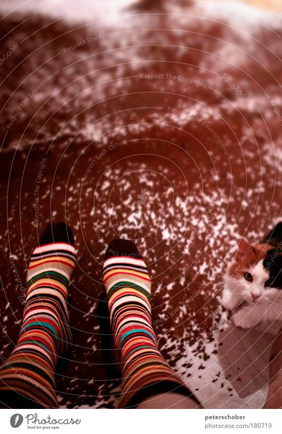 Paul Smith Farbfoto Innenaufnahme Textfreiraum oben Schwache Tiefenschärfe Totale Tierporträt Blick in die Kamera harmonisch Erholung Wohnung Fuß Strümpfe Fell