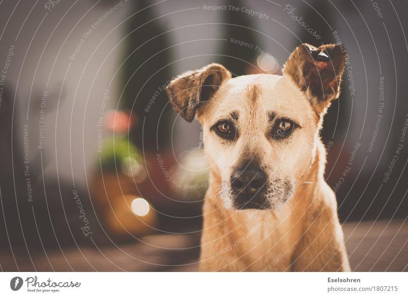 Hunde sterben nie. Tier Haustier Tiergesicht Fell 1 beobachten warten Freundlichkeit Glück kuschlig Neugier niedlich Fröhlichkeit Lebensfreude Vertrauen loyal
