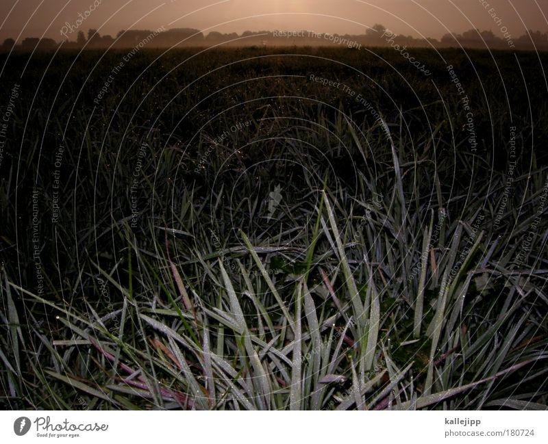 ohne nutella geh ich nicht aus dem haus Natur Pflanze Tier Wiese Herbst Landschaft Umwelt Wetter Feld Nebel Wassertropfen Freizeit & Hobby Lifestyle Trauer Klima Weide