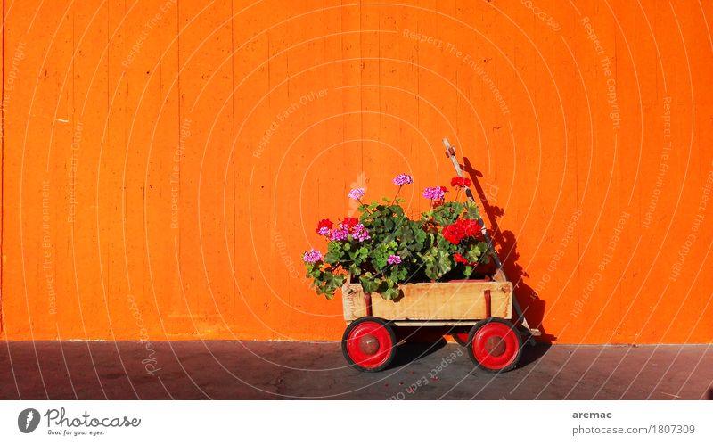 Flower Power Pflanze Blume Wand Frühling Mauer orange Fassade Güterverkehr & Logistik Anhänger Topfpflanze Handwagen