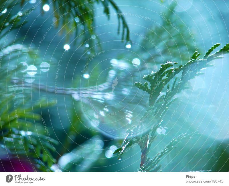 Sommerregentraum Farbfoto Außenaufnahme Tag Natur Pflanze Wassertropfen Wetter Regen Baum Sträucher außergewöhnlich glänzend nass grün bizarr Vergänglichkeit
