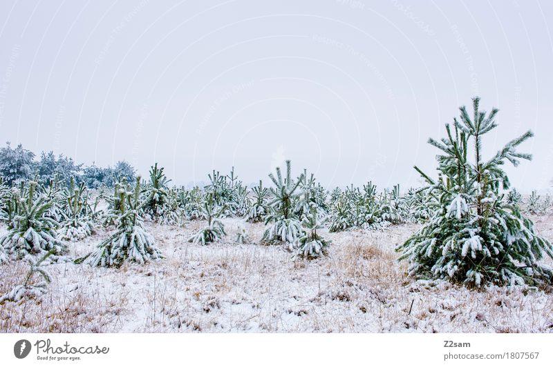 Keine Lust auf Wohnzimmer Natur blau grün weiß Baum Landschaft ruhig Winter dunkel Umwelt kalt natürlich Schnee grau Nebel Eis
