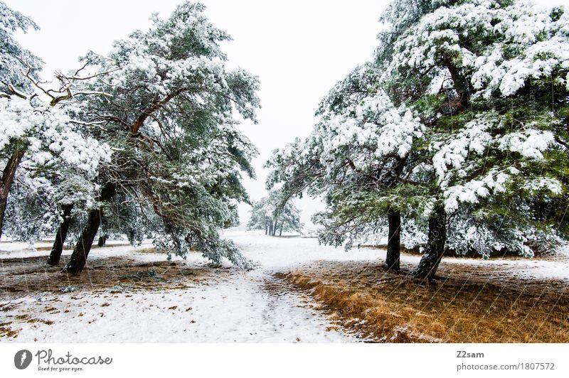 Wintertraum Natur Landschaft Eis Frost Schnee Baum Wald Heide einfach kalt nachhaltig natürlich trist braun grün weiß Einsamkeit ruhig Umwelt Umweltschutz