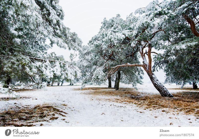 Winterzauber Umwelt Natur Landschaft Klima Eis Frost Schnee Baum Wald einfach kalt nachhaltig natürlich trist braun grün weiß Einsamkeit Idylle ruhig