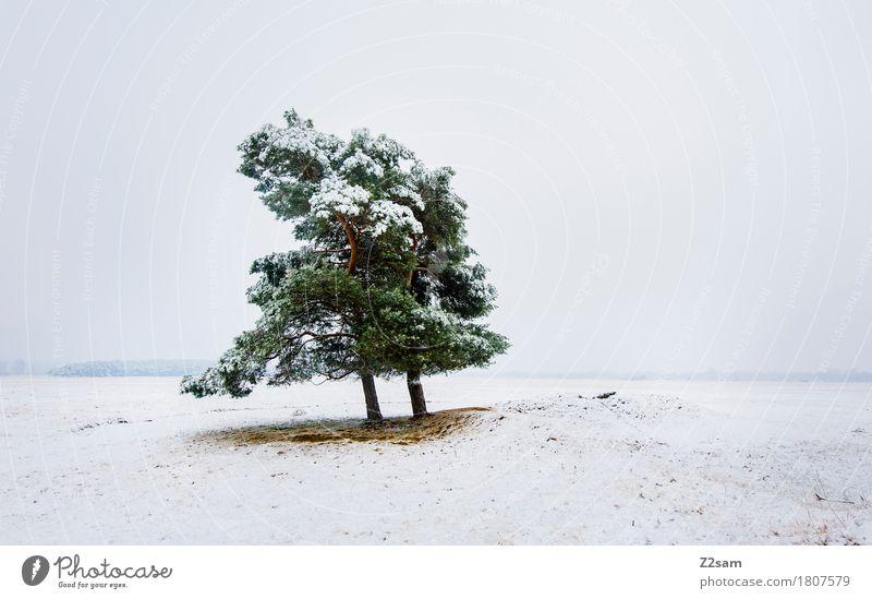 Ein Bäumchen steht... Winter Umwelt Natur Landschaft schlechtes Wetter Eis Frost Schnee Baum Heide einfach kalt nachhaltig natürlich trist grün weiß Einsamkeit