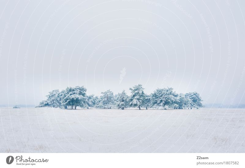 Gruppenkuscheln Winter Umwelt Natur Landschaft schlechtes Wetter Eis Frost Schnee Baum Heide einfach kalt nachhaltig natürlich trist grau weiß Einsamkeit Klima