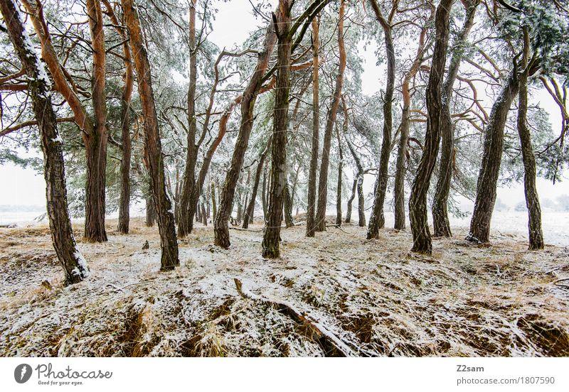 Nachzügler Winter Umwelt Natur Landschaft schlechtes Wetter Eis Frost Baum Wald bedrohlich einfach kalt trist weiß Idylle nachhaltig Umweltschutz