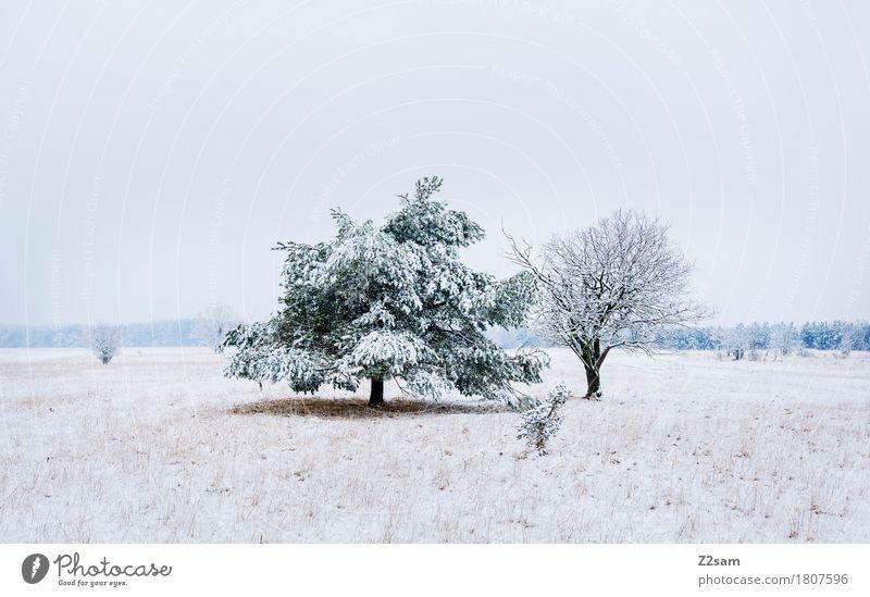 zweisam Natur weiß Baum Landschaft Winter Umwelt kalt natürlich Schnee grau Zusammensein Eis trist Idylle einfach geheimnisvoll