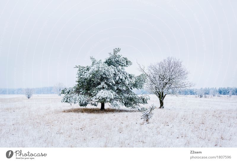 zweisam Winter Umwelt Natur Landschaft schlechtes Wetter Eis Frost Schnee Baum Heide einfach Zusammensein kalt nachhaltig natürlich trist grau weiß