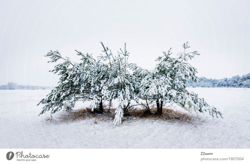 Baummonster Winter Umwelt Natur Landschaft schlechtes Wetter Eis Frost Schnee Heide einfach kalt nachhaltig natürlich trist weiß bizarr Einsamkeit Idylle ruhig