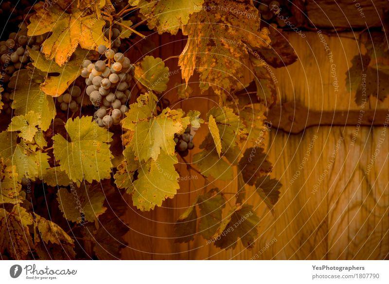 Rote Trauben im herbstlichen Dekor alt Farbe grün Landschaft Blatt gelb Herbst Holz Lebensmittel Deutschland Design Frucht Textfreiraum Wachstum retro süß