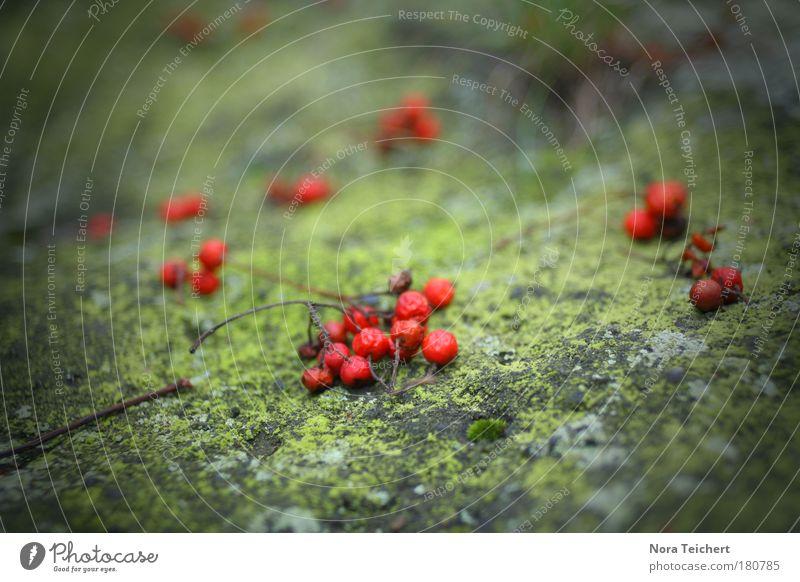 Im Wald. Natur grün schön rot Pflanze Umwelt Landschaft Stein Blüte träumen Kunst Park Stimmung Felsen liegen außergewöhnlich
