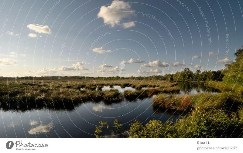 Himmelmoor Farbfoto Außenaufnahme Textfreiraum oben Tag Reflexion & Spiegelung Sonnenlicht Zentralperspektive Weitwinkel Umwelt Natur Landschaft Wasser Wolken