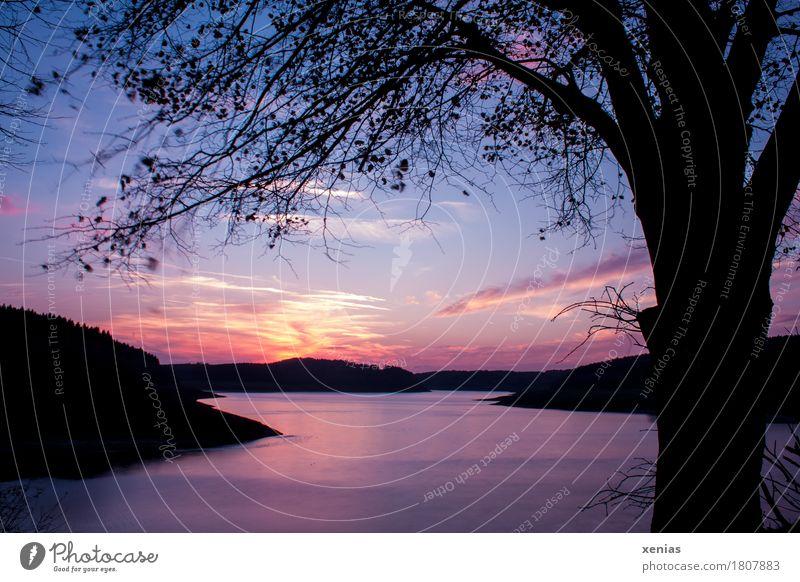 Dämmerung am See Natur Ferien & Urlaub & Reisen blau Sommer Wasser Baum Landschaft Erholung Blatt ruhig schwarz gelb Herbst Glück rosa