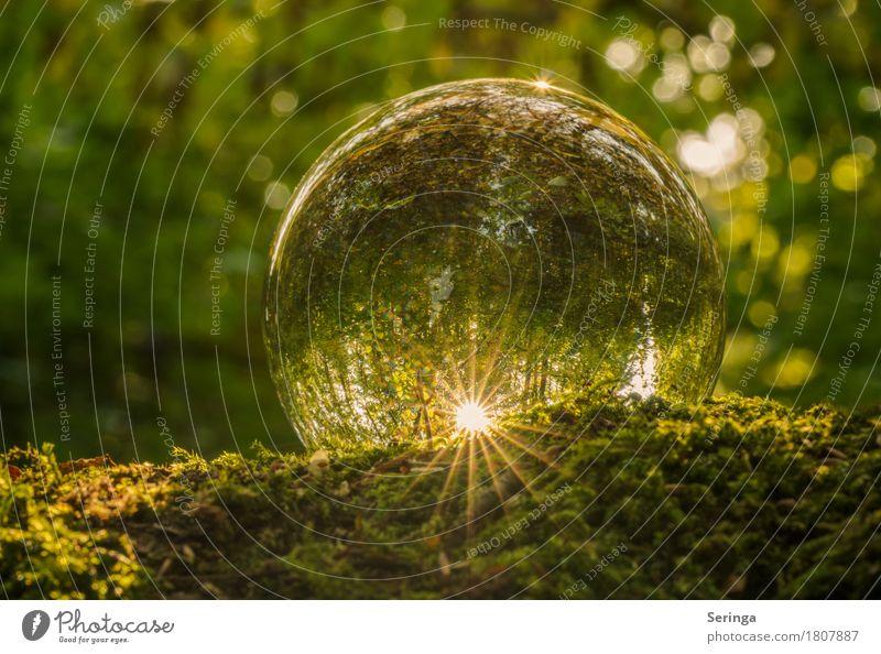 Aussicht für das Jahr 2017 Glas leuchten Glaskugel Moosteppich Flair Sonne grün Farbfoto mehrfarbig Außenaufnahme Nahaufnahme Detailaufnahme Makroaufnahme