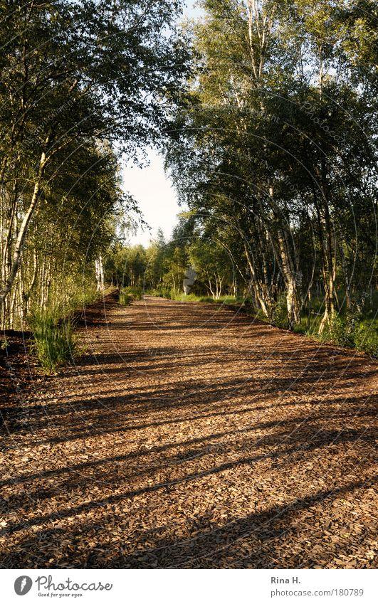 Lange Schatten Umwelt Natur Landschaft Pflanze Erde Sommer Schönes Wetter Baum Park Wald genießen Wärme braun gelb grün Gefühle Glück Zufriedenheit Lebensfreude