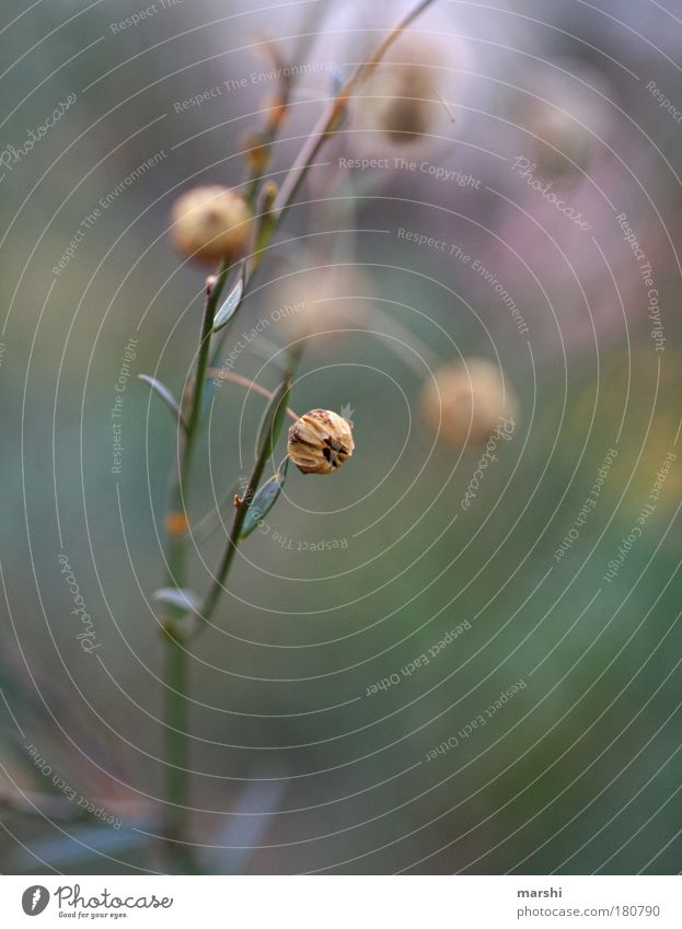 schleierhaft Natur grün Pflanze Blatt Landschaft Wiese Herbst Gras klein braun Stimmung Sträucher violett Surrealismus unklar Grünpflanze