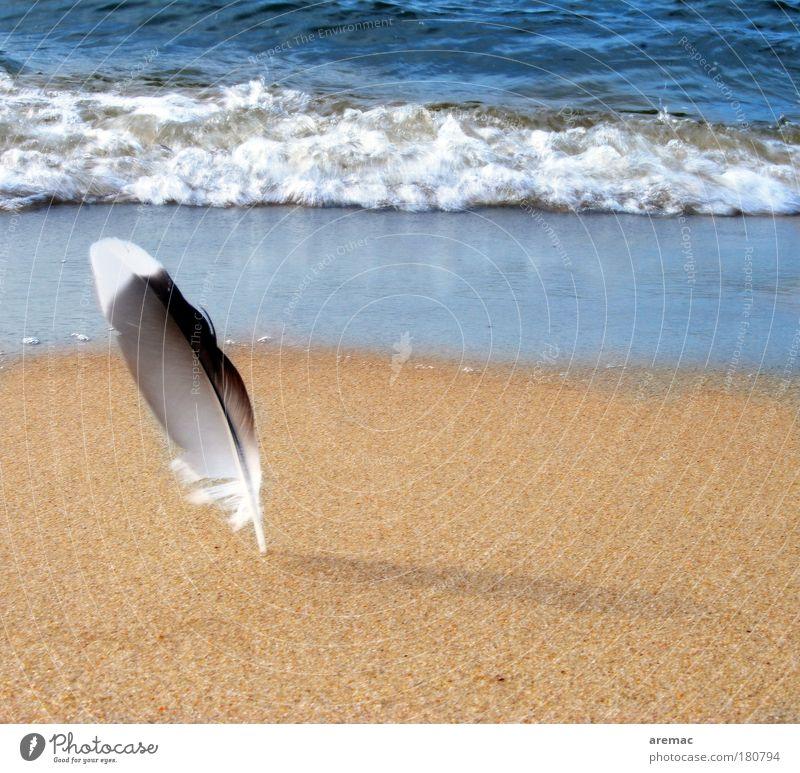 Federleicht Natur Meer Sommer Strand ruhig Tier Sand Stimmung Wellen Küste Ostsee Möwe Vogel Sommerurlaub