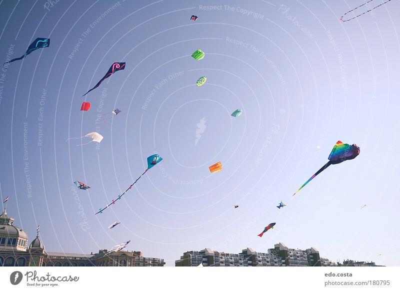 Kite #2 #2  Farbfoto Außenaufnahme Menschenleer Morgen Kontrast Silhouette Starke Tiefenschärfe Froschperspektive Luft Himmel Sonne Milan Lenkdrachen Blick frei