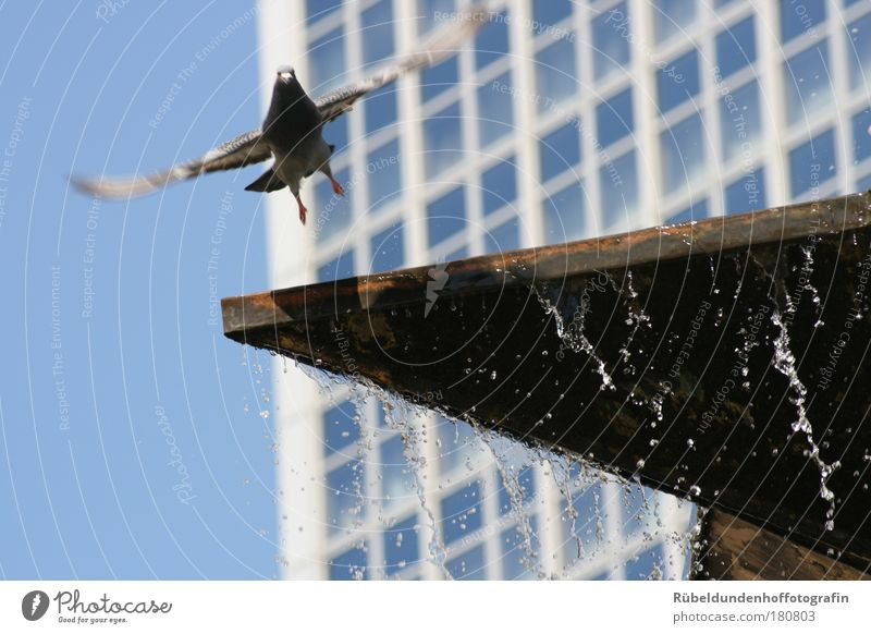 Dove Natur Wasser Himmel blau Sommer schwarz Tier Fenster Glück grau Luft Umwelt fliegen Flügel Wildtier