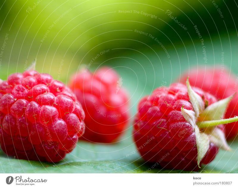 himbeerchen grün rot Sommer Ernährung Garten Lebensmittel Frucht frisch süß rund rein Duft genießen Bioprodukte saftig Vegetarische Ernährung