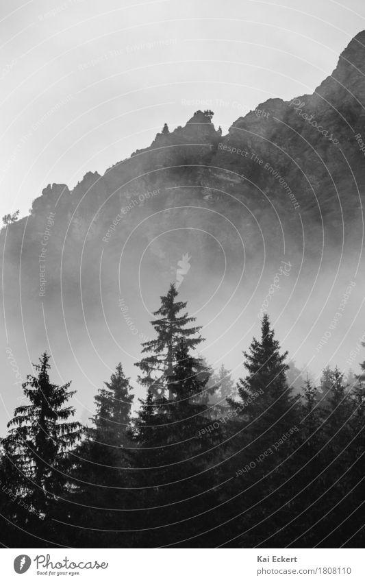 Berge, Wald und Nebel I Natur Landschaft Baum Alpen Berge u. Gebirge dunkel kalt ruhig Einsamkeit geheimnisvoll Surrealismus Vergänglichkeit photocase
