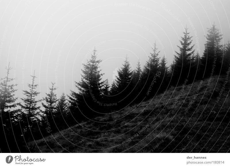 tannenzäpfle Natur Himmel Baum Pflanze Wald Landschaft Stimmung Feld Nebel Umwelt trist Hügel Tanne schlechtes Wetter Schwarzweißfoto