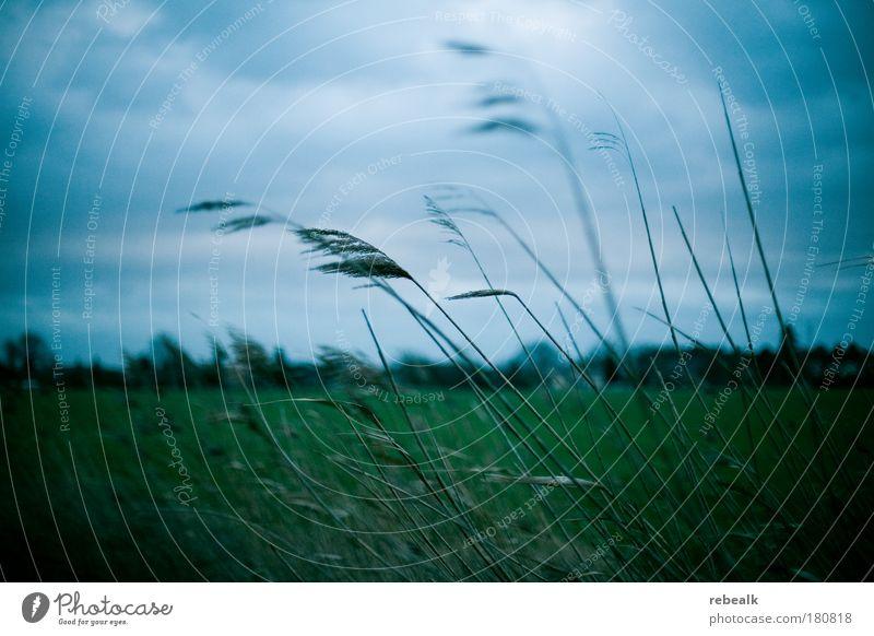 im Wind Natur Himmel grün blau Pflanze Wolken dunkel kalt Herbst Wiese Gefühle Gras Traurigkeit Stimmung Feld