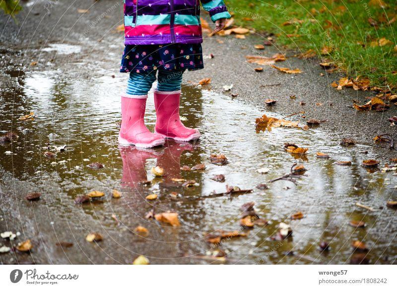Regentrude I Kind Kleinkind Mädchen 1 Mensch 1-3 Jahre Herbst Gras Kastanie Park stehen warten klein nass mehrfarbig herbstlich Pfütze Gummistiefel rosa
