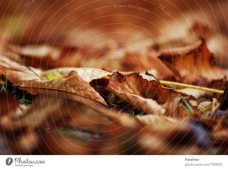 Herbstlaub Farbfoto mehrfarbig Außenaufnahme Menschenleer Tag Licht Unschärfe Umwelt Natur Pflanze Erde Luft Wetter Schönes Wetter Wind Baum Blatt Park kalt