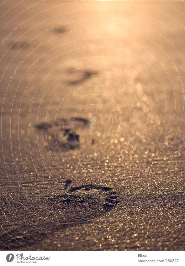 Fußspuren im golden glitzernden Sand Strand gehen laufen frei Optimismus Willensstärke Mut Tatkraft Warmherzigkeit achtsam Barfuß Sandstrand Spuren Unschärfe