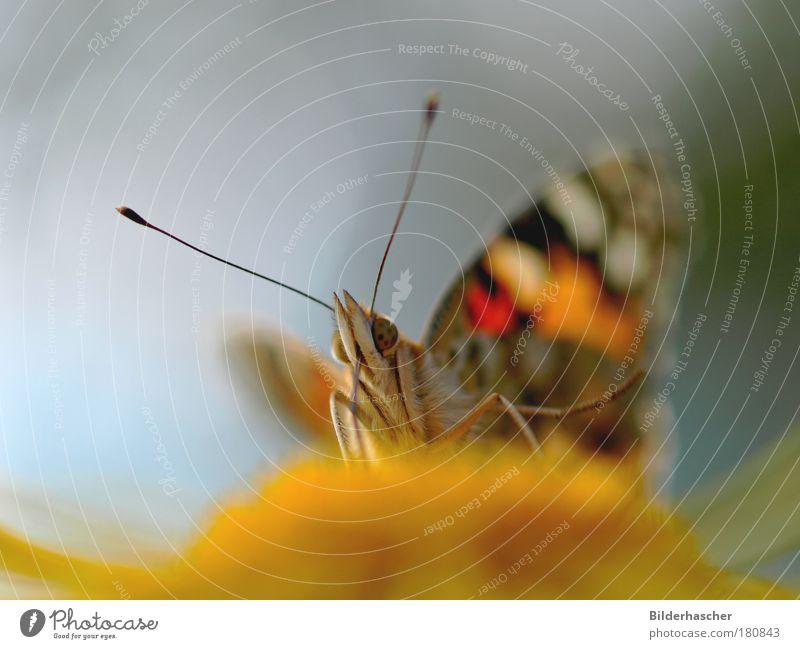 Geflügeltes Wesen Farbfoto Außenaufnahme Makroaufnahme Textfreiraum links Hintergrund neutral Tag Licht Schatten Reflexion & Spiegelung Lichterscheinung