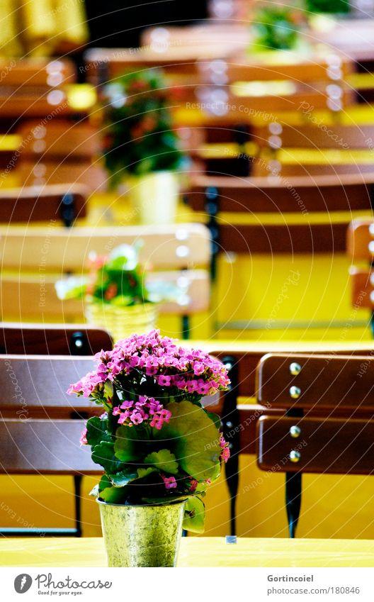 Sitzlandschaft Sommer Sonne Blume gelb Feste & Feiern braun Dekoration & Verzierung Ernährung Tisch Stuhl Gastronomie Restaurant Wirtschaft Abendessen Mittagessen Blumentopf