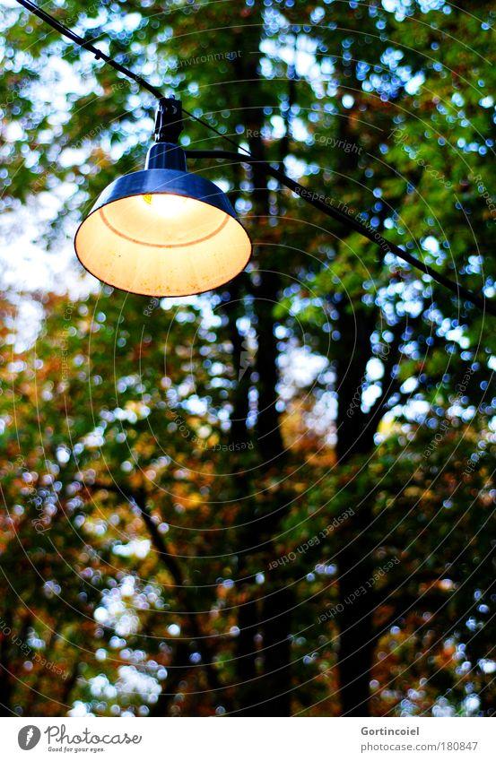 Biergarten Himmel Natur blau grün Baum rot Blatt schwarz gelb Herbst braun Lampe Deutschland Tourismus Park gold