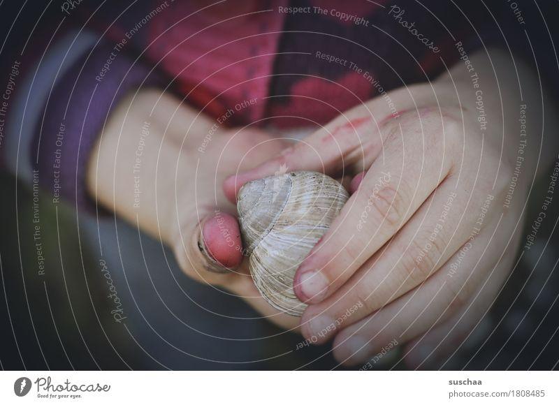 kinderhände I Kind Hand Finger dreckig abenteuerlust entdecken berühren ansehen Versuch erleben festhalten Schnecke Schneckenhaus Zuhause bewohnt Kindheit