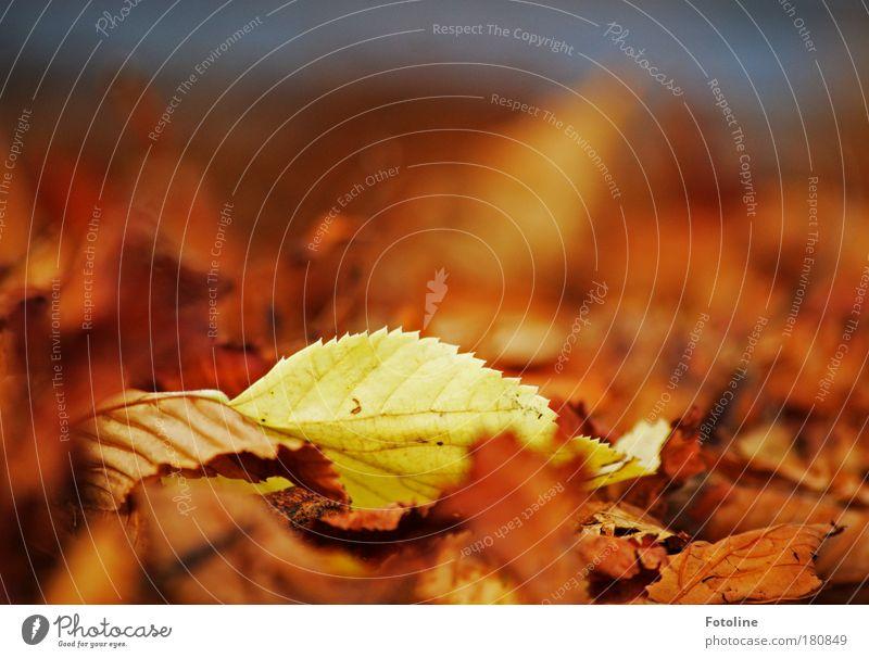 Außenseiter Natur alt Baum Pflanze Blatt Umwelt gelb Herbst Luft Park braun Erde Wetter Wind natürlich Schönes Wetter